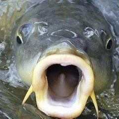 fish_hunter